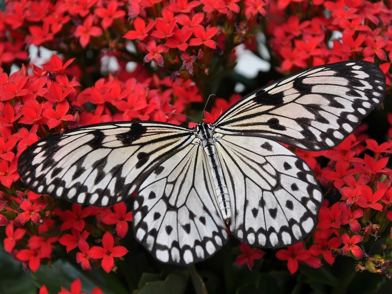 G - The Magic Life Butterfly House.jpg