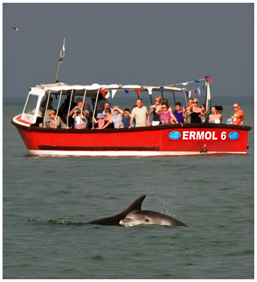 Dolphinspotting boat trips NewQuay.jpg